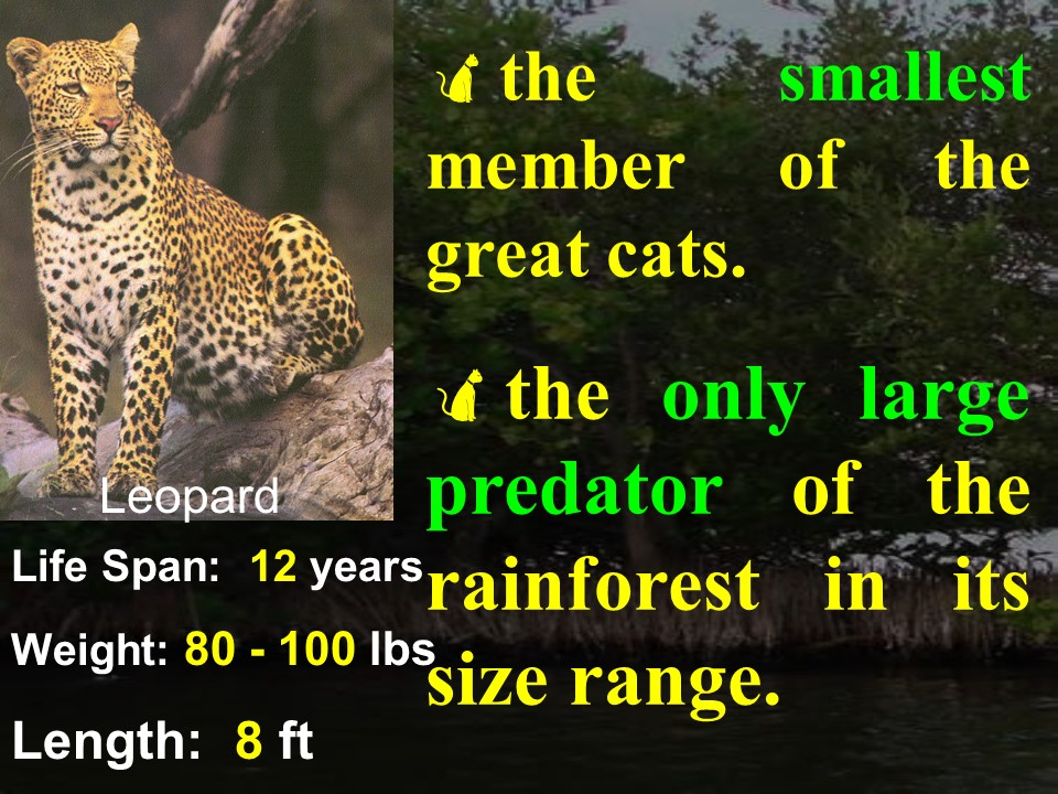 Leopard facts 1