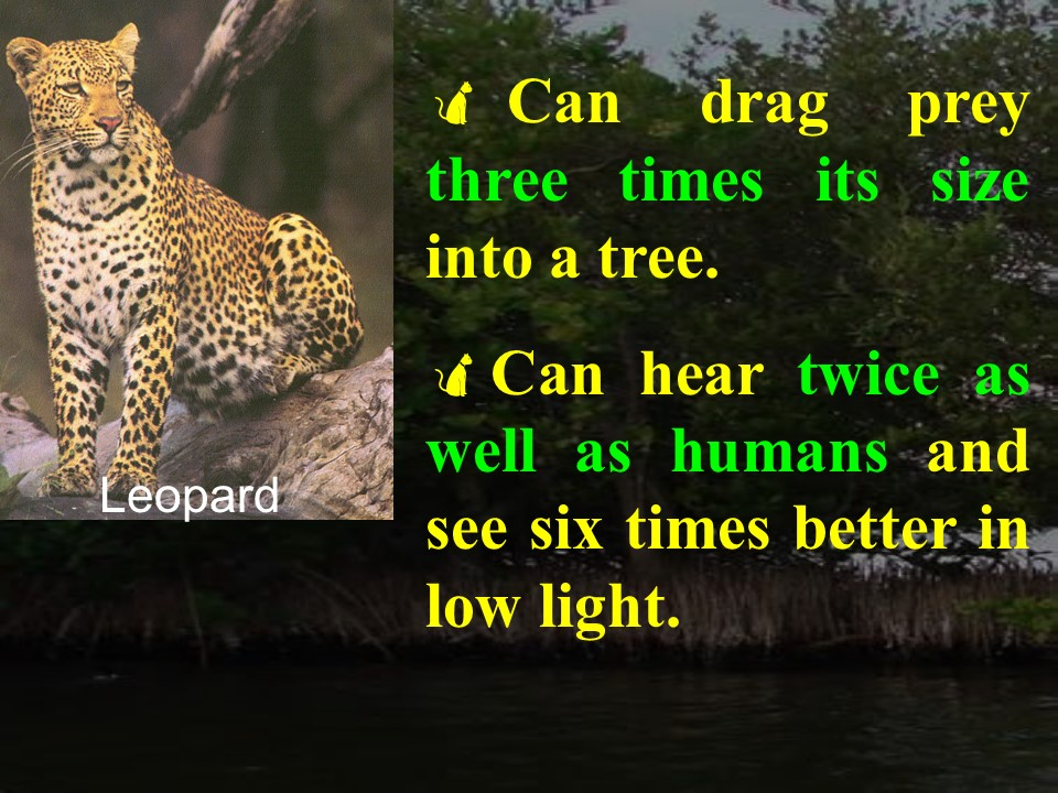 Leopard facts 2