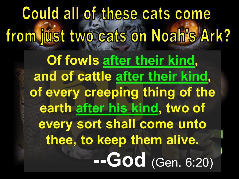 "Biblical phrase:  ""after their kind"""